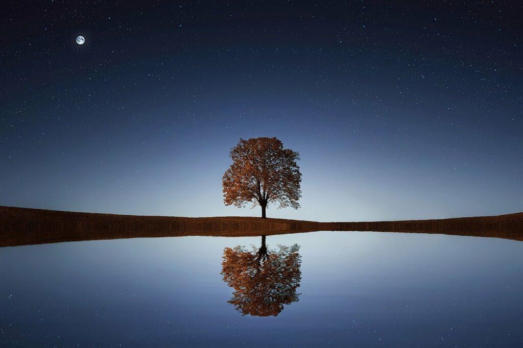 pohon ditengah padang
