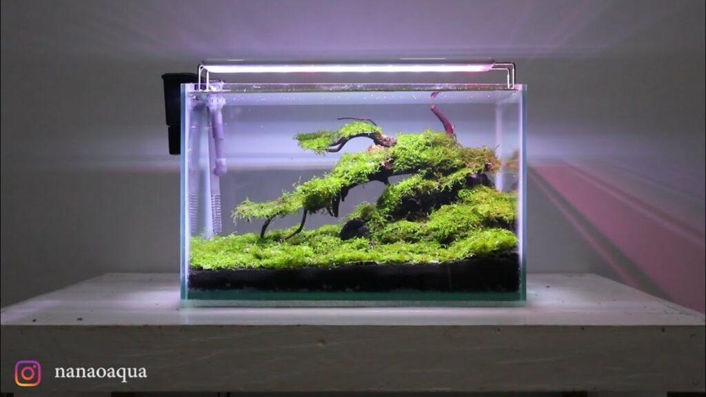 bonsai aquascape mini