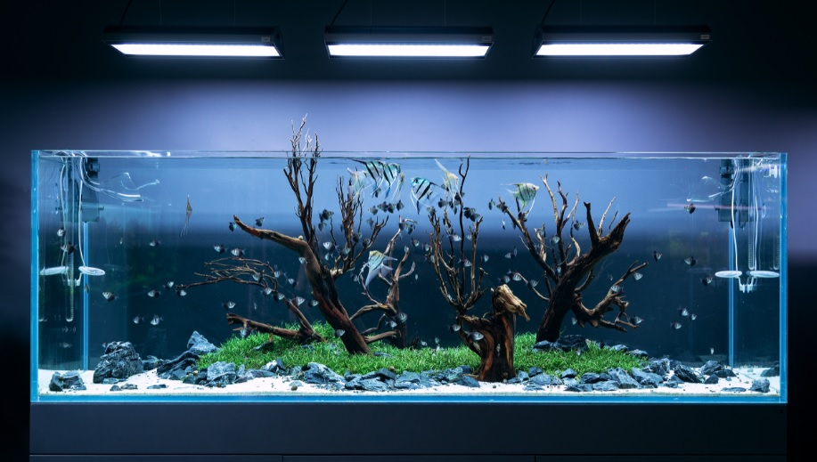 Apa Itu Aquascape Definisi Dan Ide Tema Aquascape Yang Indah Divedigital Id
