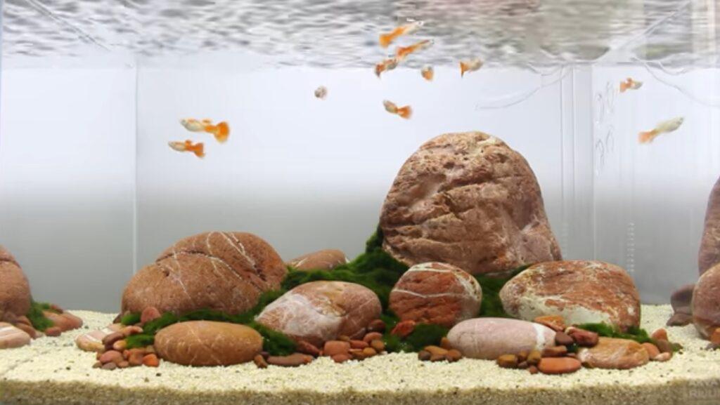 aquascape batu