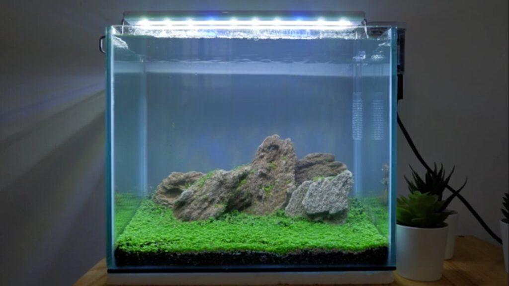 aquascape iwagumi