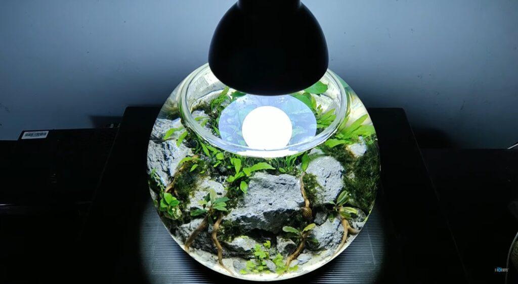 aquascape unik berbentuk bulat