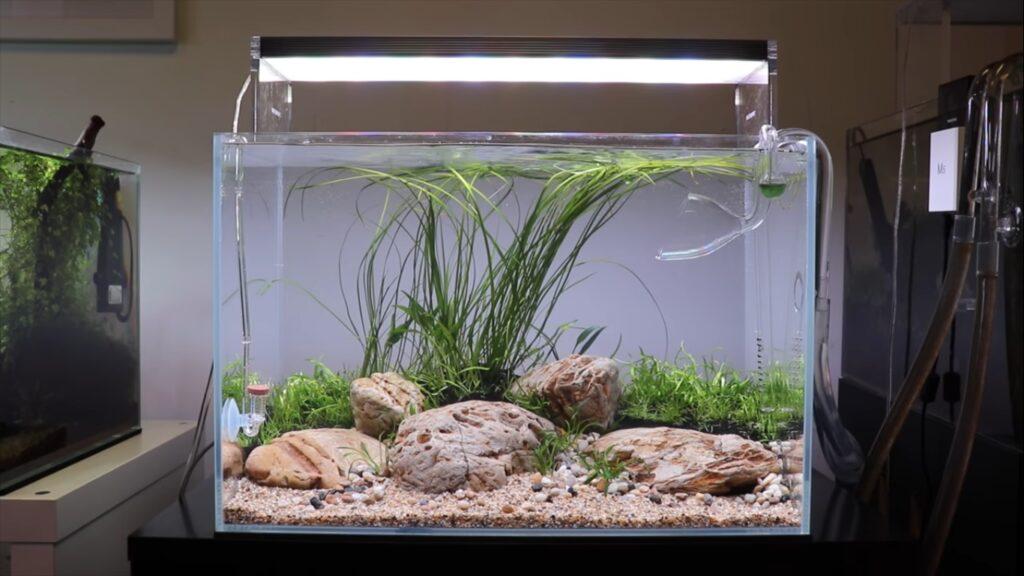 desain aquascape batu pasir