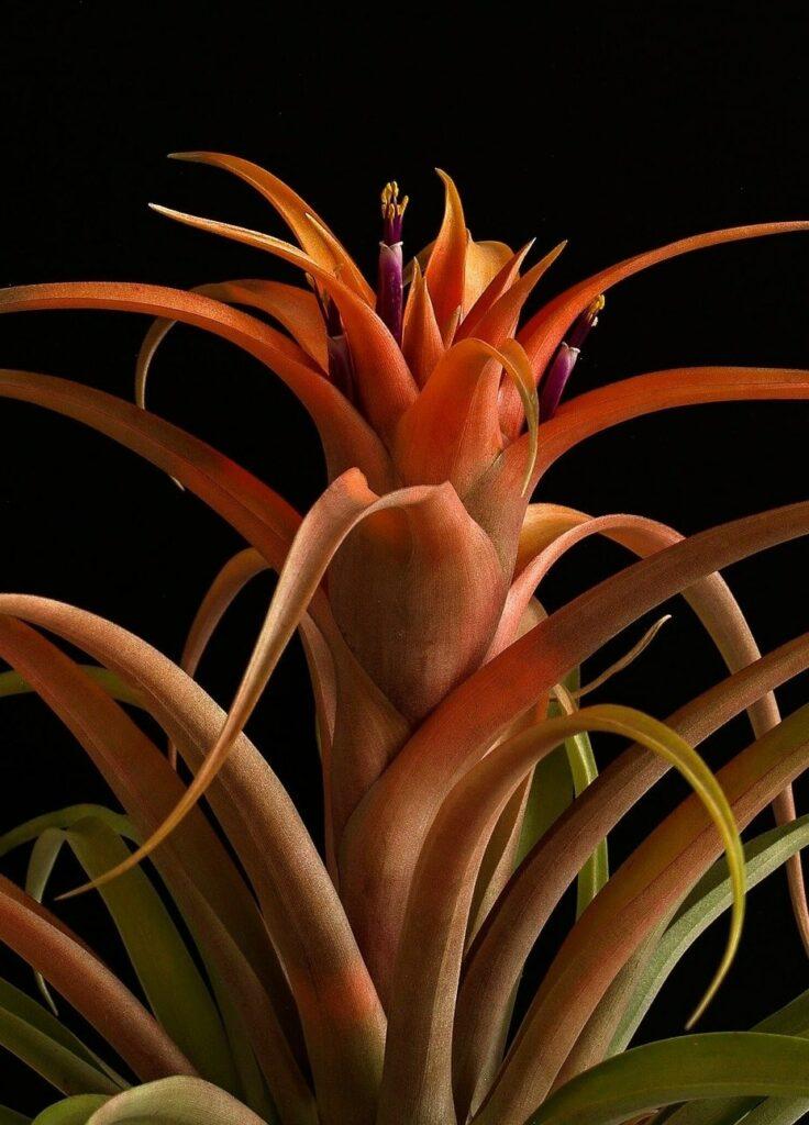 wallpaper whatsapp gambar bunga